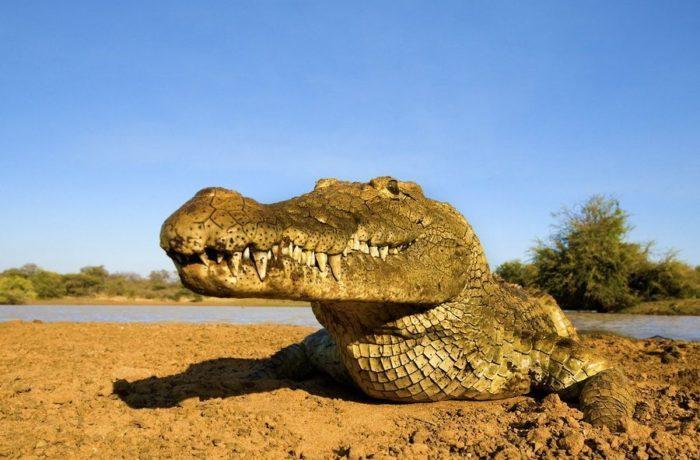 Das jähzornige Krokodil
