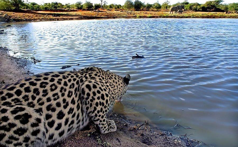 BB-Benny-Rebel-Fotoreise-Suedafrika-Leopard