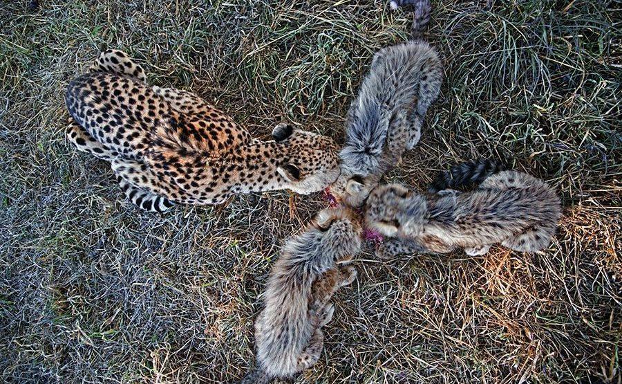 BT-Benny-Rebel-Fotoreise-Suedafrika-Gepard
