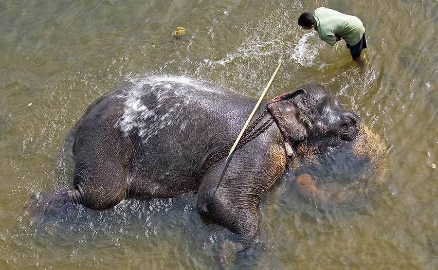 CA-Benny-Rebel-Fotoreise-ElefantSri-Lanka