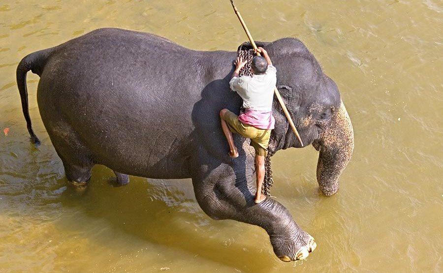 CB-Benny-Rebel-Fotoreise-ElefantSri-Lanka