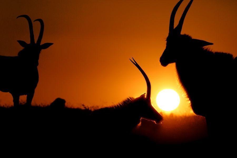 CB-Benny-Rebel-Fotoreise-Suedafrika-Rappen-Antilope