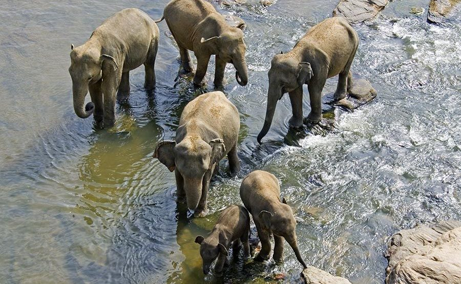 CC-Benny-Rebel-Fotoreise-ElefantSri-Lanka