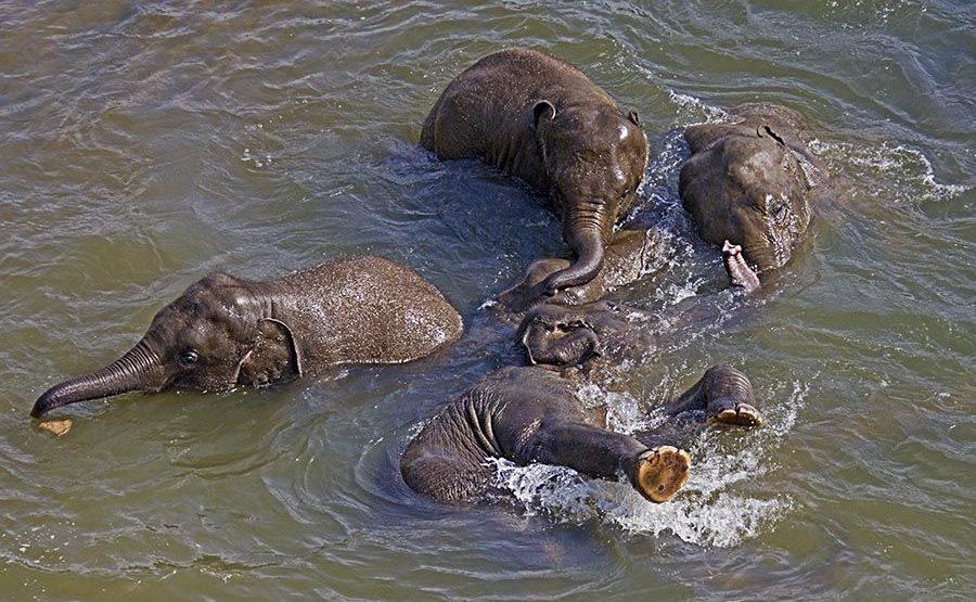 CD-Benny-Rebel-Fotoreise-ElefantSri-Lanka