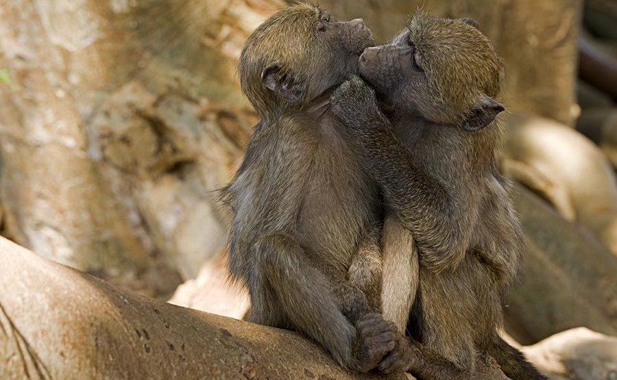 CED-Benny-Rebel-Fotoreise-Suedafrika-Pavian