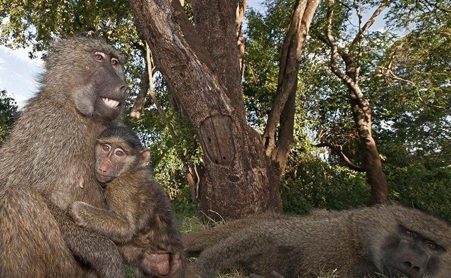 CES-Benny-Rebel-Fotoreise-Tansania-Pavian-1