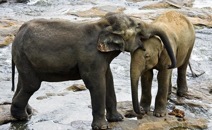 CH-Benny-Rebel-Fotoreise-ElefantSri-Lanka