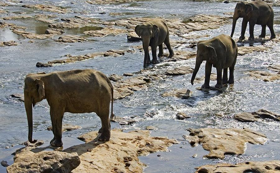 CJ-Benny-Rebel-Fotoreise-ElefantSri-Lanka