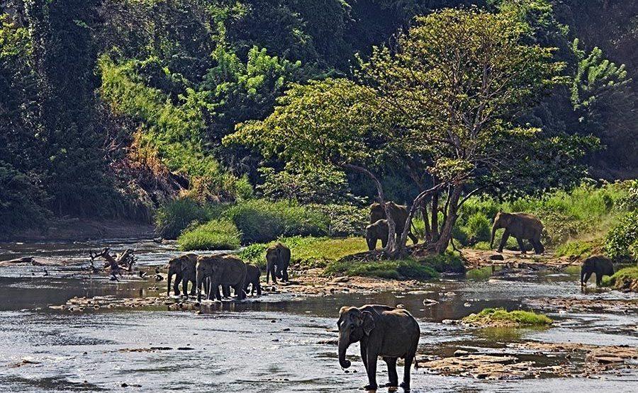 CK-Benny-Rebel-Fotoreise-ElefantSri-Lanka