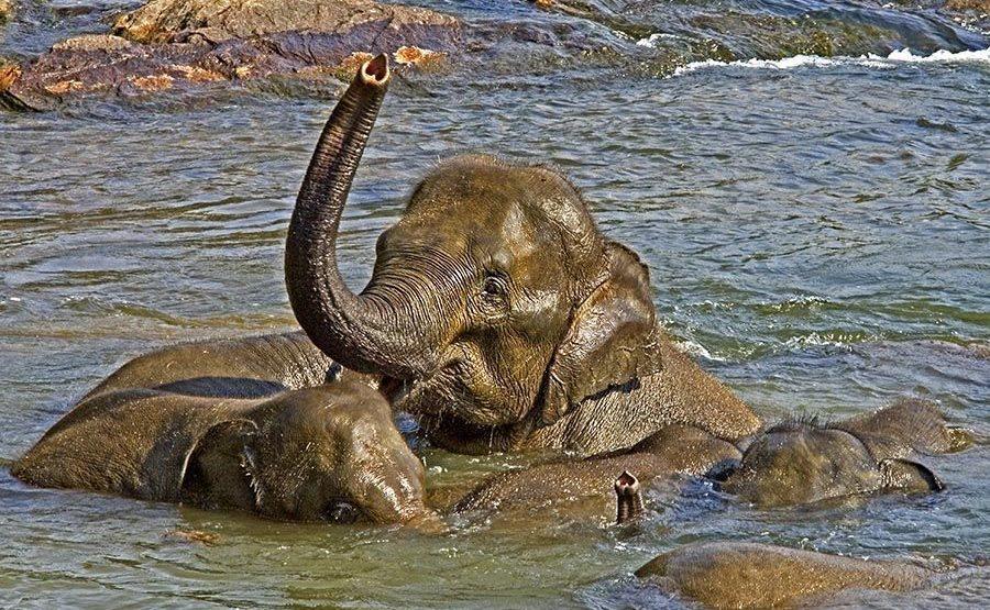 CL-Benny-Rebel-Fotoreise-ElefantSri-Lanka