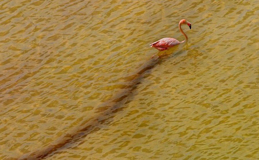 DA-Benny-Rebel-Fotoreise-Flamingo-Galapagos