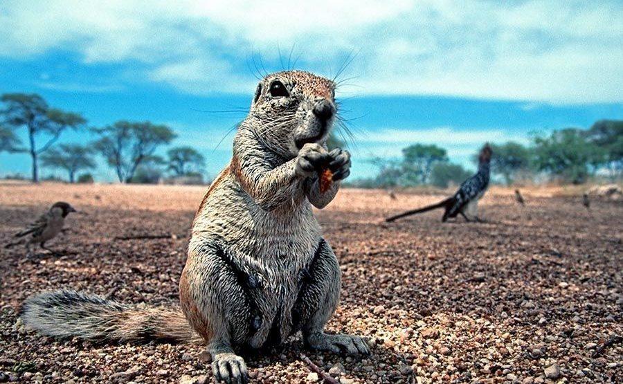 DA-Benny-Rebel-Fotoreise-Namibia-Erdhoernchen