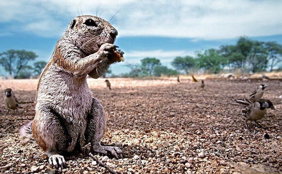 DAA-Benny-Rebel-Fotoreise-Namibia-Erdhoernchen