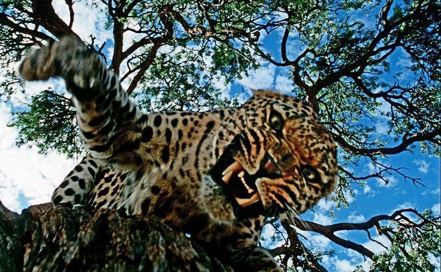 DB-Benny-Rebel-Fotoreise-Namibia-Leopard
