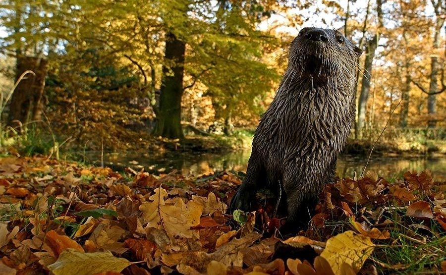 DD-Benny-Rebel-Fotoreise-Otter