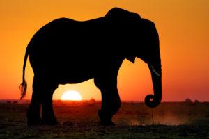 Fotosafari nach Botswana und Simbabwe