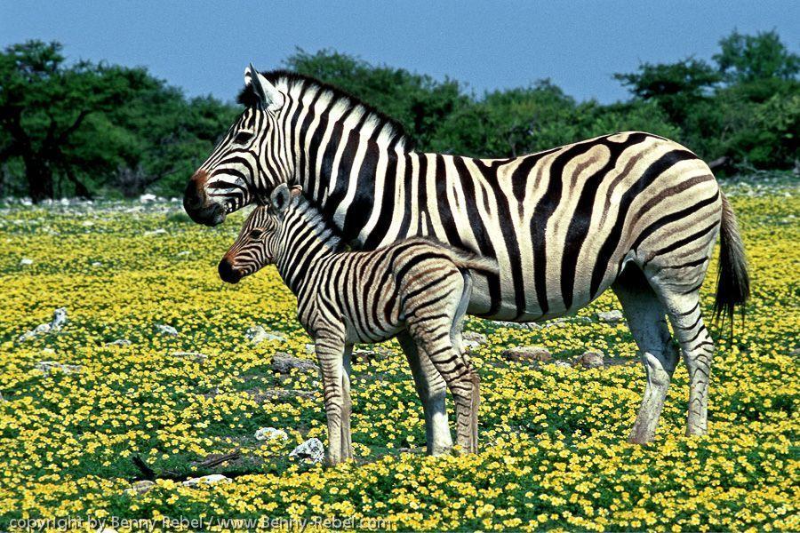 Namibia Nord, Fotosafari, Tierfotografie