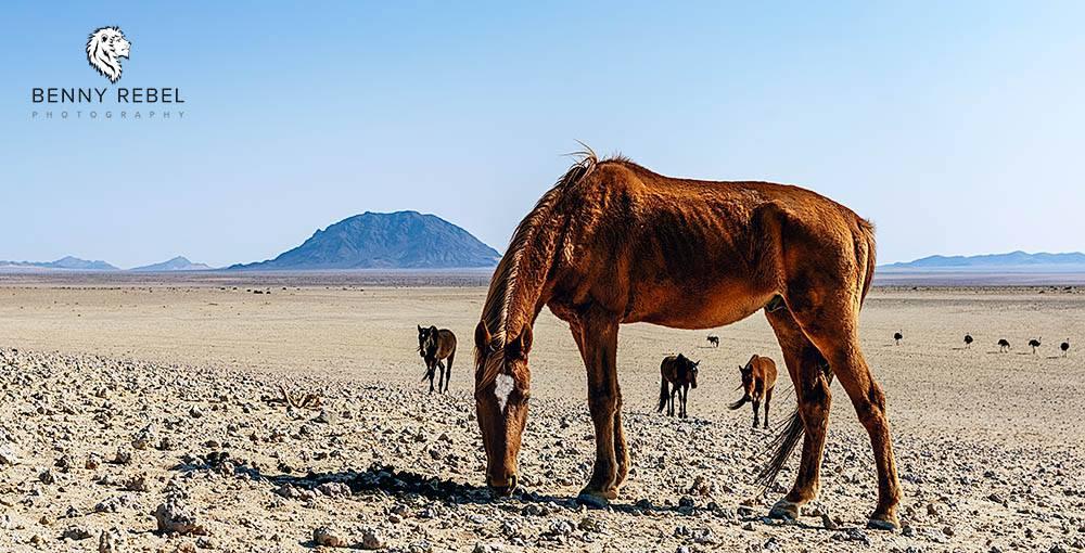 Fotourlaub, Namibia