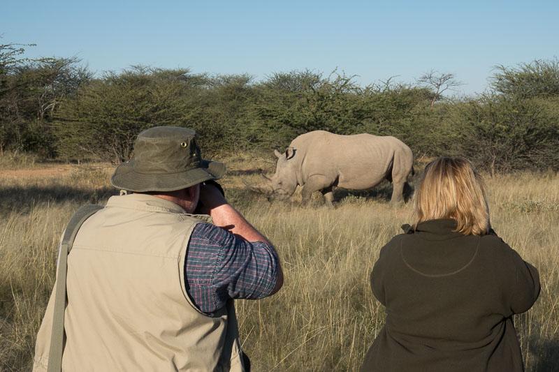 Fotosafari Namibia Nashorn Fotografie