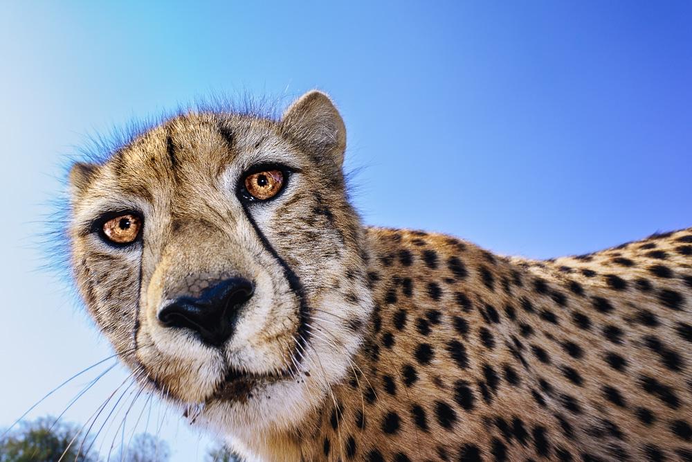 Fotoreise, Fotosafari, Fotoworkshop, Fotografie, Fotourlaub, Leopard, Kenia