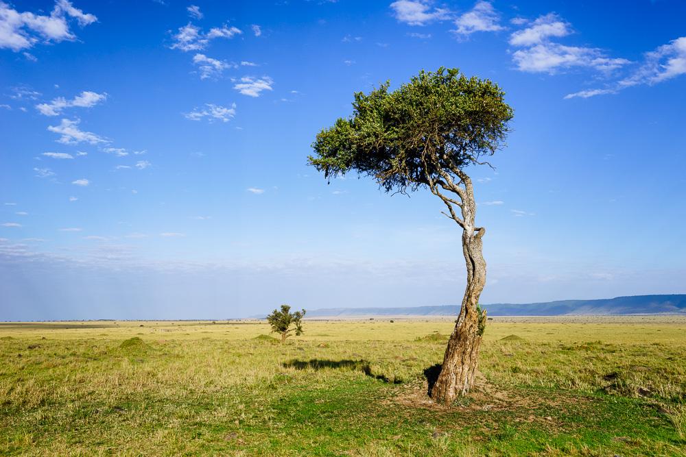 Nordkenia, Fotoreise, Fotosafari,