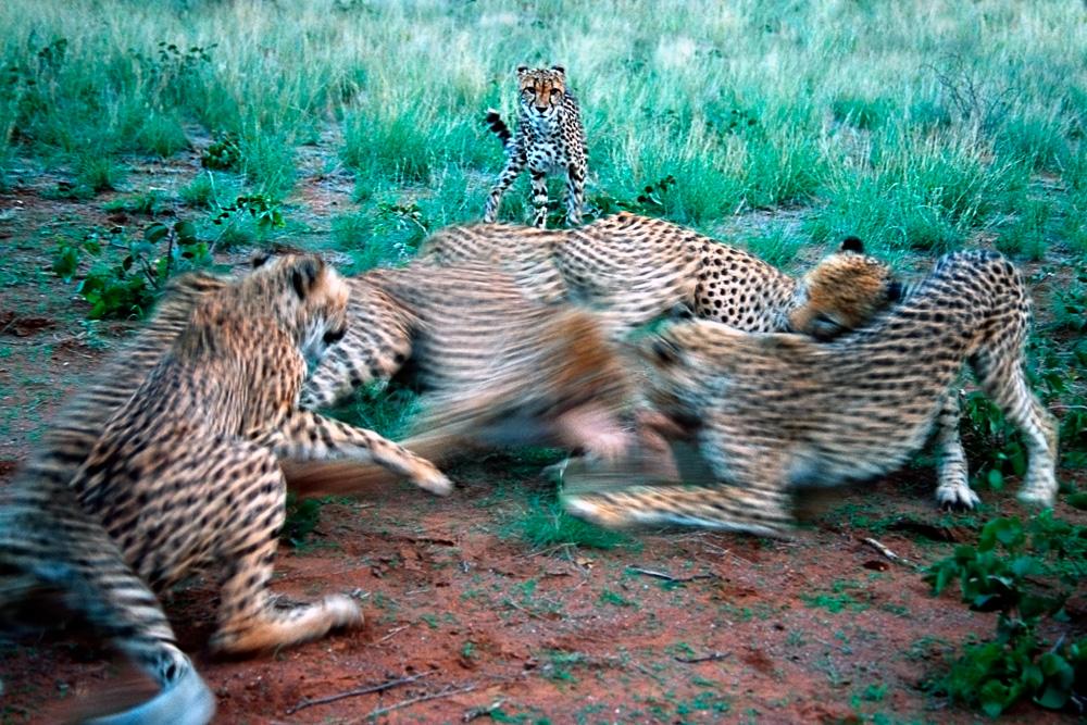 Norden Kenia, Fotografie, Tiere, Wildnis, Naturfotografie
