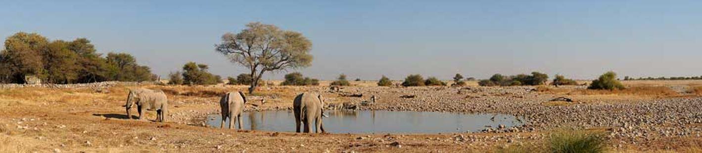 Fotoreise Okaukuejo Namibia