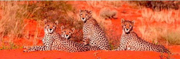 Fotosafari-Namibia-Fotoreise-Afrika-Kalahari-11