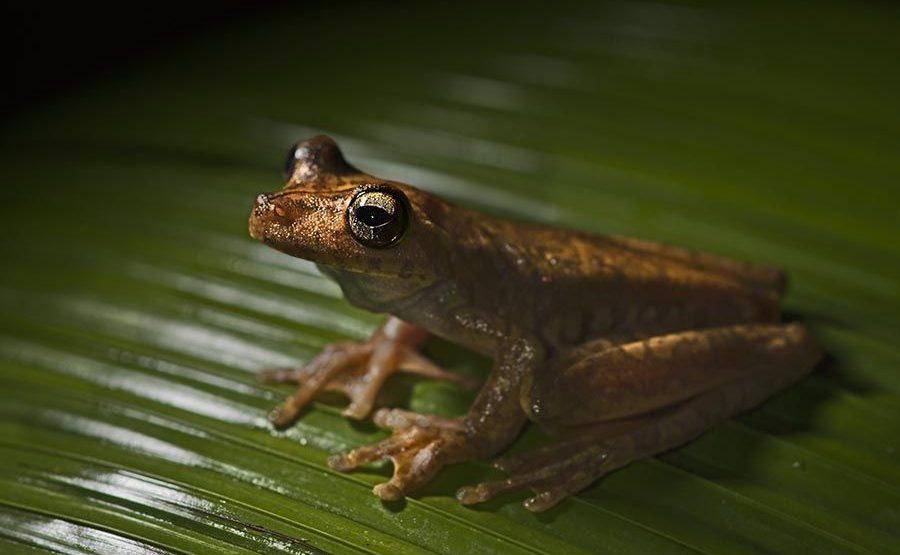 KFQ-Benny-Rebel-Fotoreise-Frosch-Costa-Rica