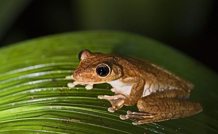 OD-Benny-Rebel-Fotoreise-Frosch-Costa-Rica