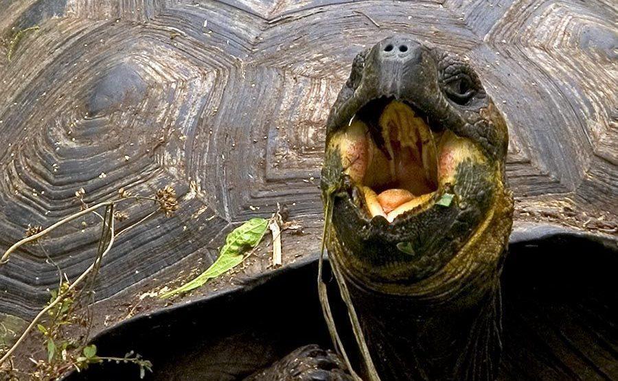 QB-Benny-Rebel-Fotoreise-Riesen-SchildkroeteGalapagos