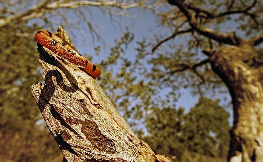 RD-Benny-Rebel-Fotoreise-Tiger-SchlangeAfrika