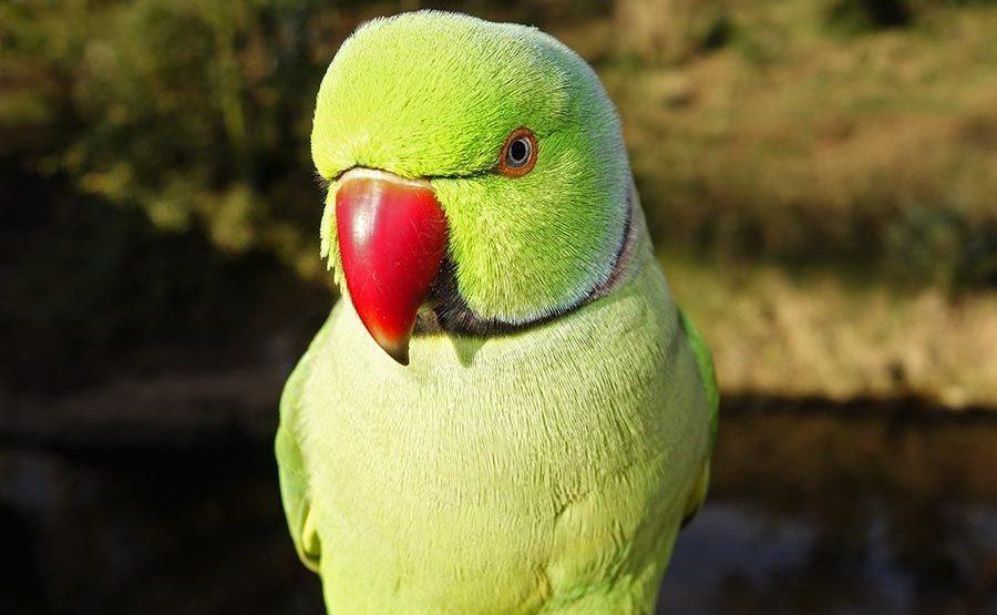 TCA-Benny-Rebel-Fotoworkshop-Vogelfotografie