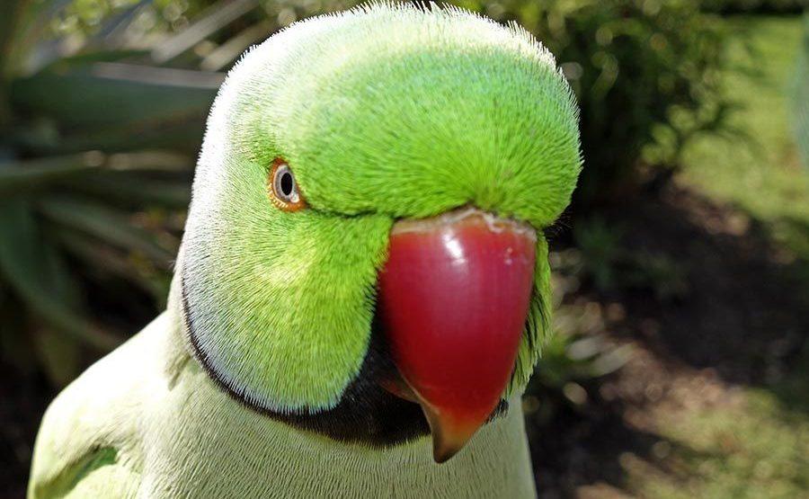 TDCSA-Benny-Rebel-Fotoworkshop-Vogelfotografie