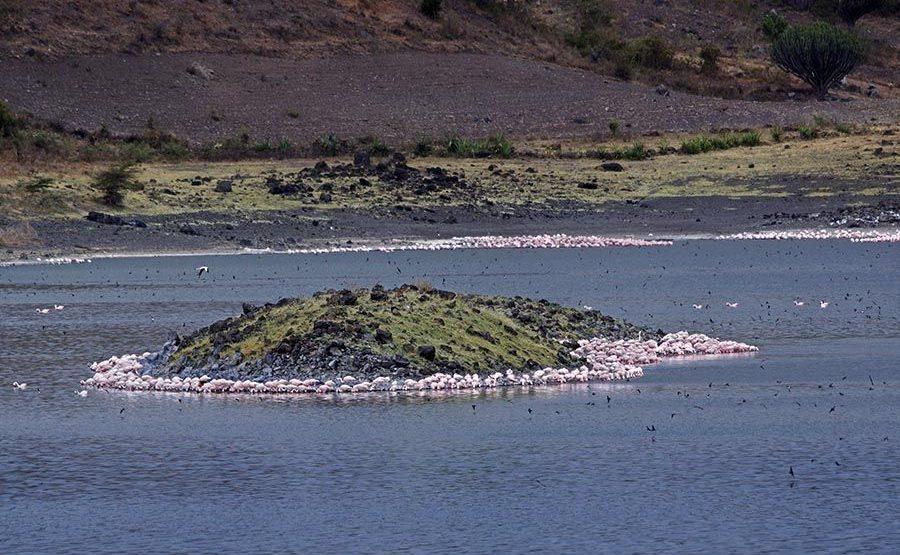 TKDD-Benny-Rebel-Fotoreise-Tansania-Flamingo