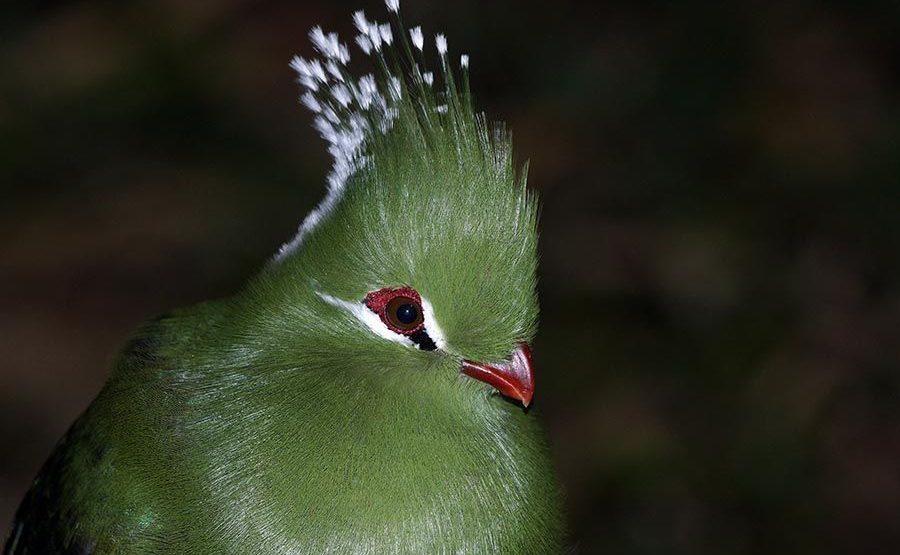UFR-Benny-Rebel-Fotoworkshop-Vogelfotografie