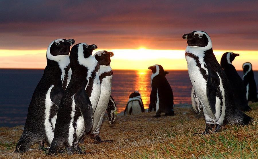 UGB-Benny-Rebel-Fotoworkshop-Suedafrika-Brillenpinguin