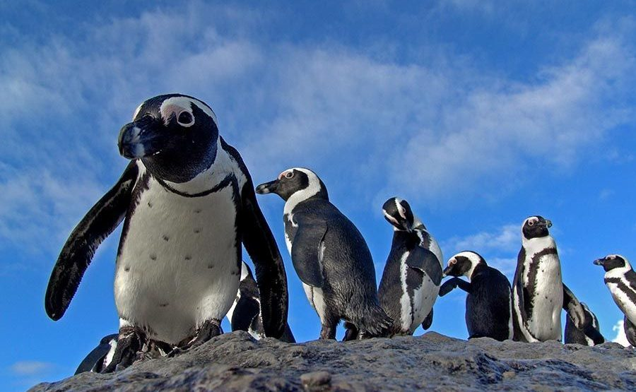 UGK-Benny-Rebel-Fotoworkshop-Suedafrika-Brillenpinguin