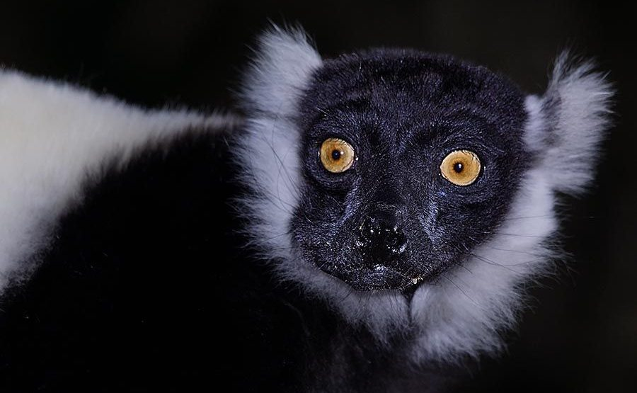 VN-Benny-Rebel-Fotoreise-Lemur