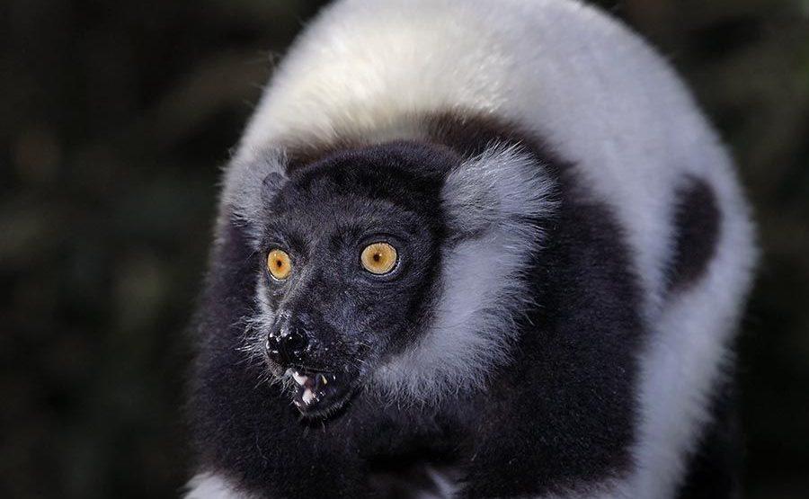 VO-Benny-Rebel-Fotoreise-Lemur