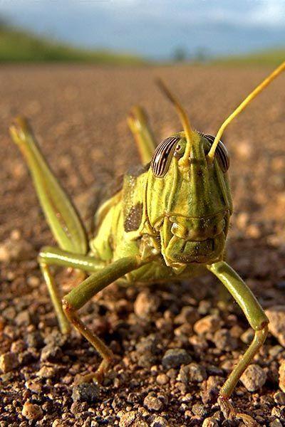ZH-A-Benny-Rebel-Fotoreise-Suedafrika-Grashuepfer