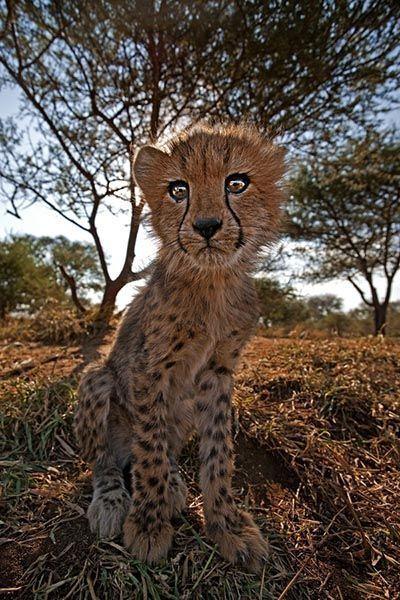 ZH-AD-Benny-Rebel-Fotoreise-Suedafrika-Gepard