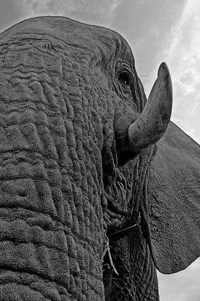 ZHA-Benny-Rebel-Fotoreise-Suedafrika-Elefant