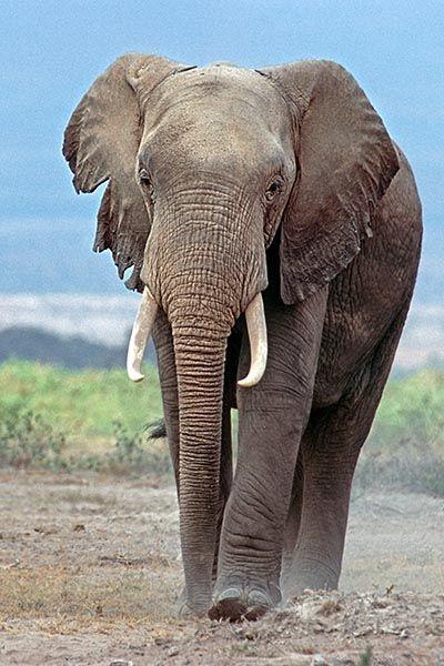 ZHB-Benny-Rebel-Fotoreise-Kenia-Elefant