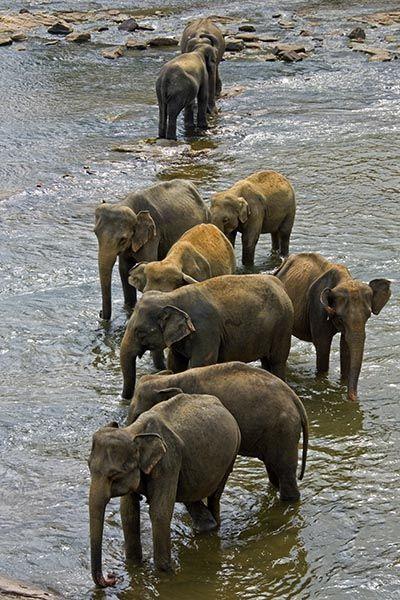 ZHD-Benny-Rebel-Fotoreise-Sri-Lanka-Elefant