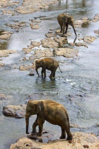 ZHE-Benny-Rebel-Fotoreise-Sri-Lanka-Elefant
