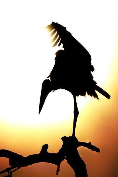 ZHE-Benny-Rebel-Fotoreise-Suedafrika-Marabu