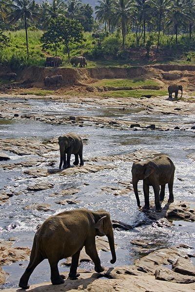 ZHF-Benny-Rebel-Fotoreise-Sri-Lanka-Elefant
