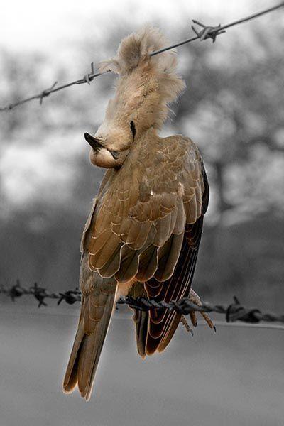 ZHN-Benny-Rebel-Fotoreise-TaubeAfrika