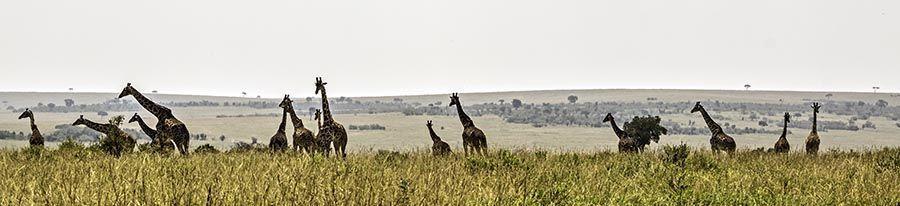 ZP-AD-Benny-Rebel-Fotoreise-Kenia-Giraffe